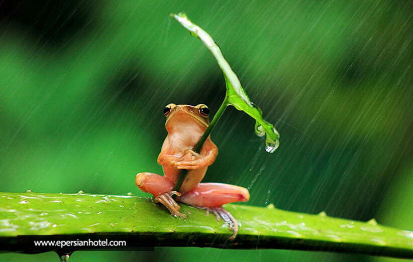 آب و هوای تبریز
