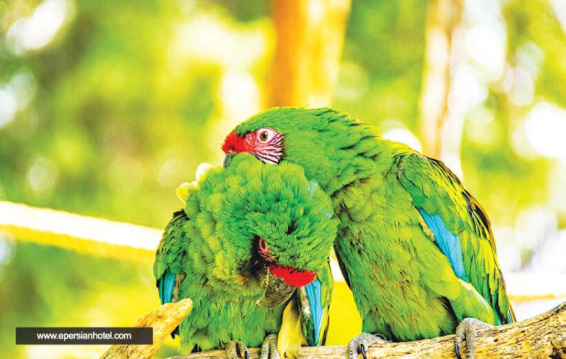آیا باغ پرندگان کیش در پارک دلفین ها است؟ قیمت و تخفیف بلیط باغ پرندگان